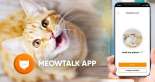 download meowtalk app android ios