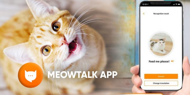 download meowtalk app android ios